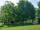 Trees | 1/400 sec | f/2.3 | 10.2 mm | ISO 50
