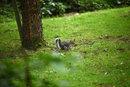 Squirrel 2   1/1600 sec   f/2.8   200.0 mm   ISO 1600