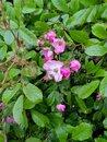 Flowers   1/100 sec   f/1.8   4.7 mm   ISO 49