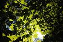 Leaves | 1/640 sec | f/4.0 | 14.0 mm | ISO 200