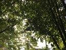 Trees   1/699 sec   f/1.8   4.0 mm   ISO 20