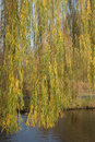 Weeping Willow | 1/500 sec | f/8.0 | 50.0 mm | ISO 400