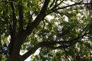 "Tree - Raw To Jpeg | 1/400 sec | f/4.0 | 30.0 mm | ISO 100 | <a target=""_blank"" href=""https://www.magezinepublishing.com/equipment/images/equipment/sd-Quattro-6064/highres/Sigma-sd-quattro-tree-SDIM0092-raw-to-jpeg_1470641713.jpg"">High-Res</a>"