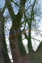 Tree - JPEG | 1/400 sec | f/3.2 | 35.0 mm | ISO 100