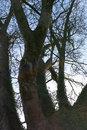 Tree - Raw To JPEG - Exposure CA | 1/400 sec | f/3.2 | 35.0 mm | ISO 100